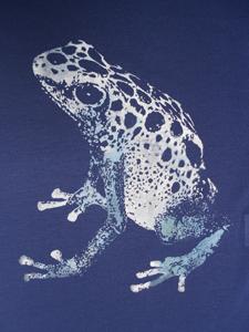 blauwe-pijlgifkikker1